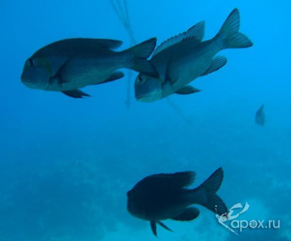крупная рыба19 м