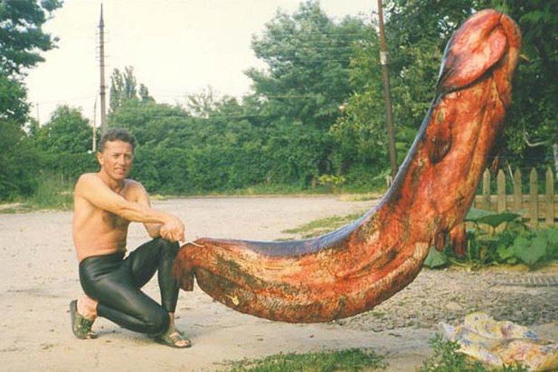 Самый длинный хуй в мире порно 3