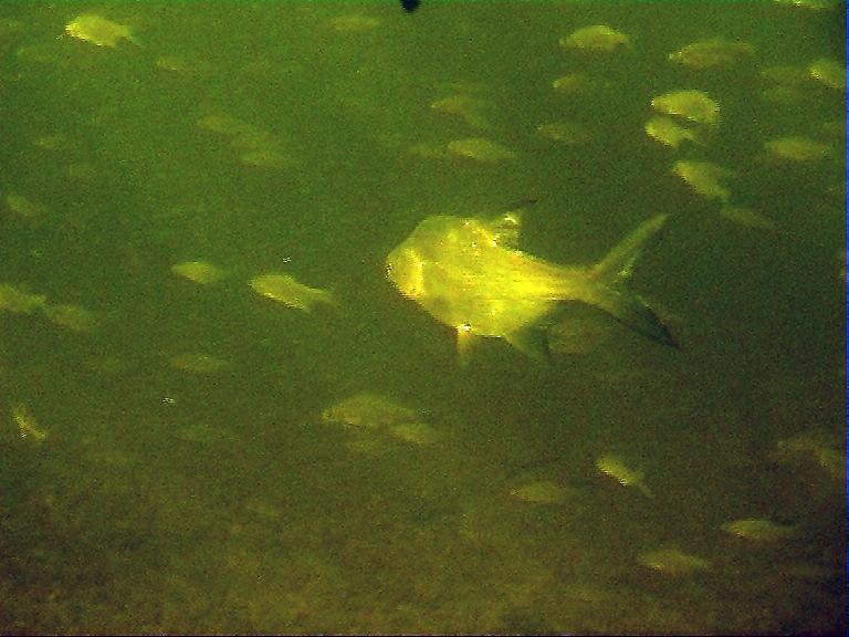 Кадр из фильма Зима 2005-06г