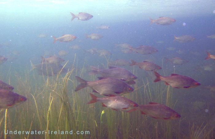 закрытие рыбалки на нерест саратов