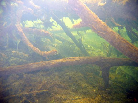 подводные (8).jpg