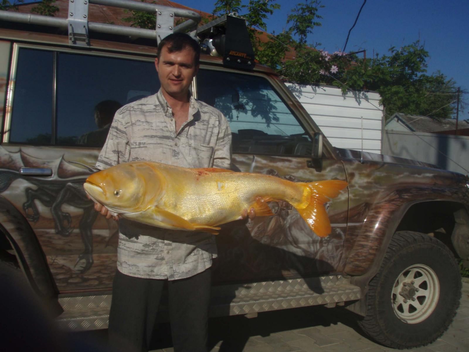 Толстолобик золотистый 16 кг