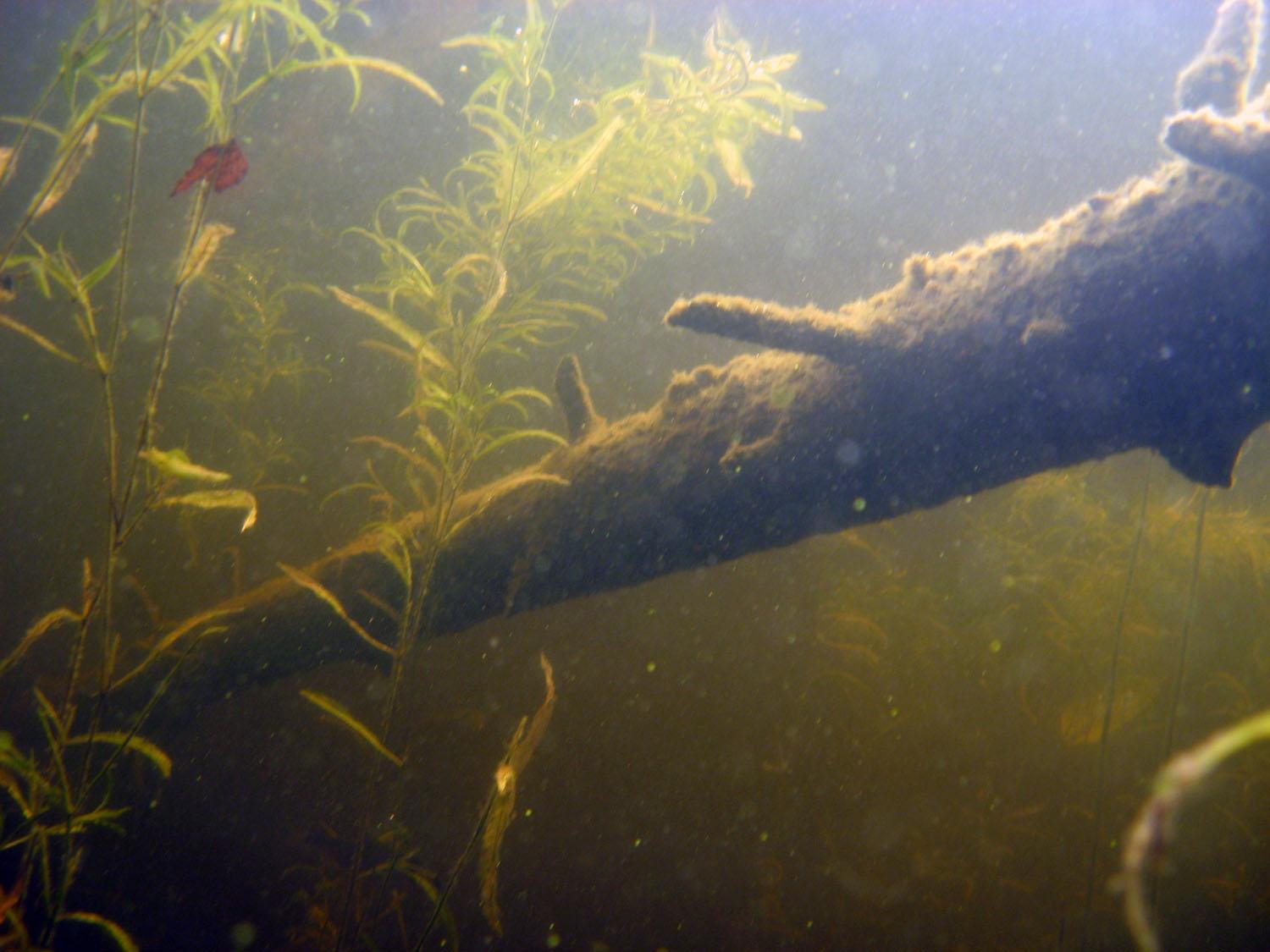 Фото в пресной воде