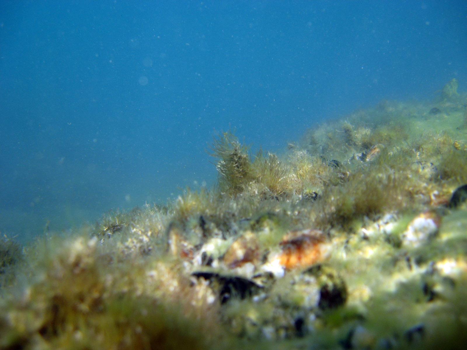 Фото сделанные на море