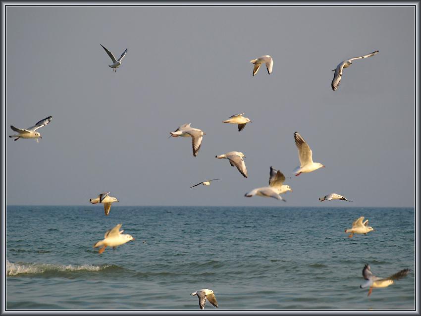 Азовские чайки