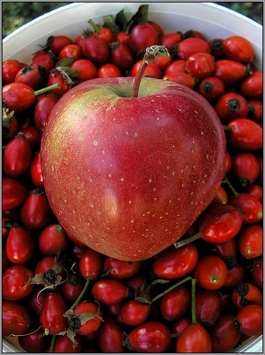 Яблоко в ведерке с шиповником.