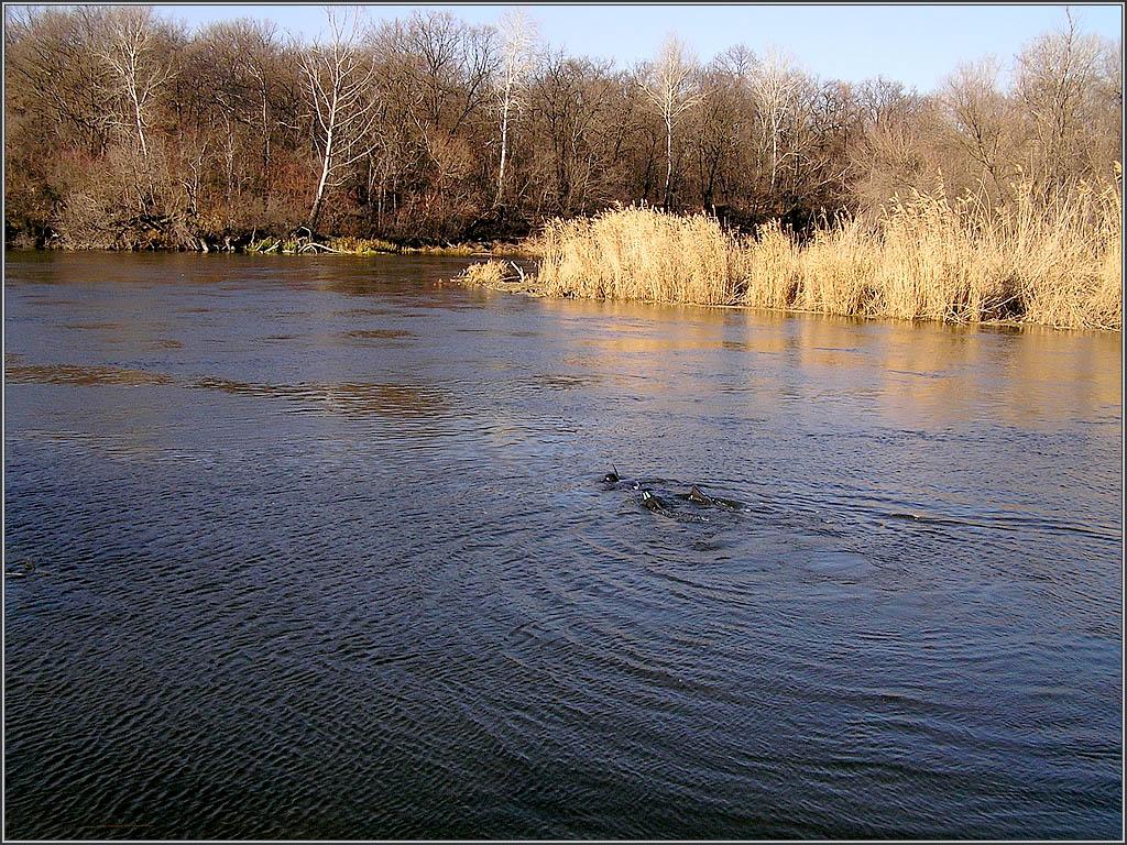 река Северский Донец, Украина